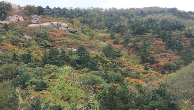 大珠山风景区位于青岛市黄岛区山川南路